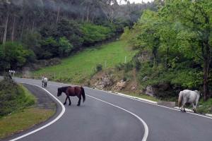 Wilde paarden langs de Spaanse kust