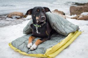 """Premium """"DoggyBag""""-slaapzak voor honden"""